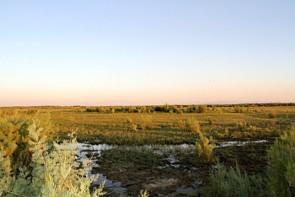 تالاب های آذربایجان غربی قربانی خشکسالی و عدم تامین حق آبه شدند