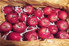 ممنوعیت صادرات سیب ، صدای کشاورزان آذربایجان غربی را درآورد